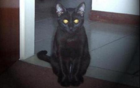 gatos negrosjpg