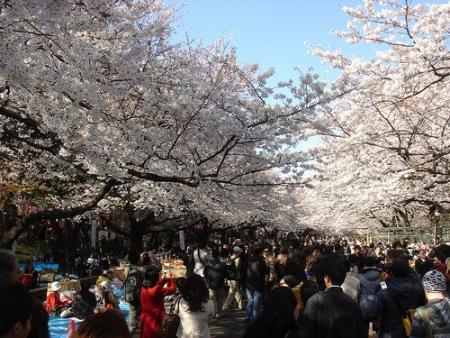 hanami-japon.jpg