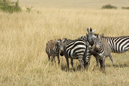 animales-kenia.jpg