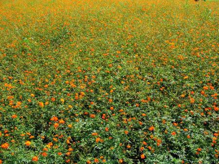 flores-japon.jpg
