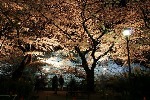 arboles-tokyo.jpg